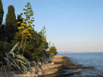 Agave (Agava), cypresses (Cupressus sempervirens) and Aleppo pines (Pinus halepensis) on the way to the lighthouse