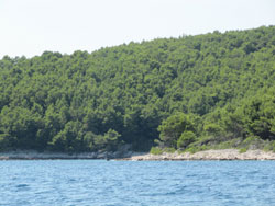 Aleppo pine forest (Pinus halepensis) in Zidigova bay